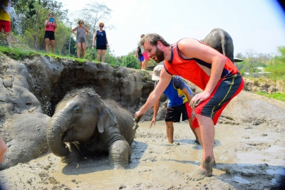 Elephant Care Chiang Mai Full Day