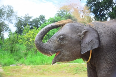 Elephant Care Chiang Mai 2 Days & 1 Night